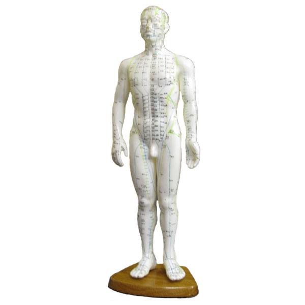 Chin. Akupunkturmodell (männlich) 51 cm