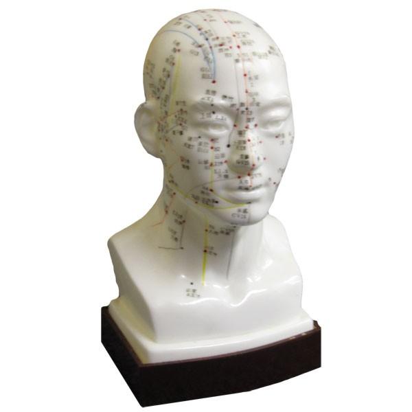 Chin. Akupunkturmodell Kopf