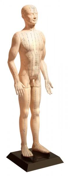Akupunkturmodell (männlich) 65 cm